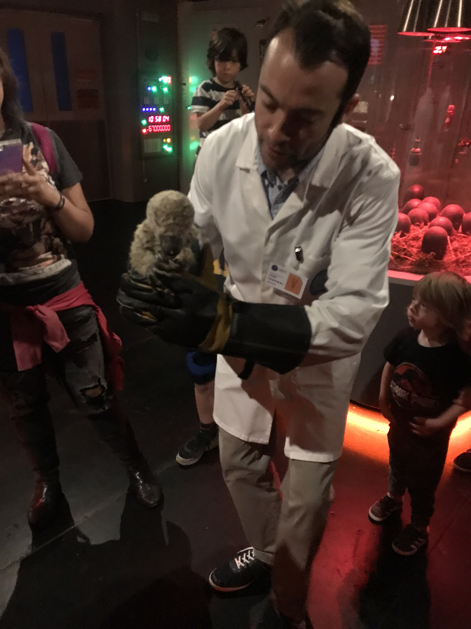 baby dakotaraptor