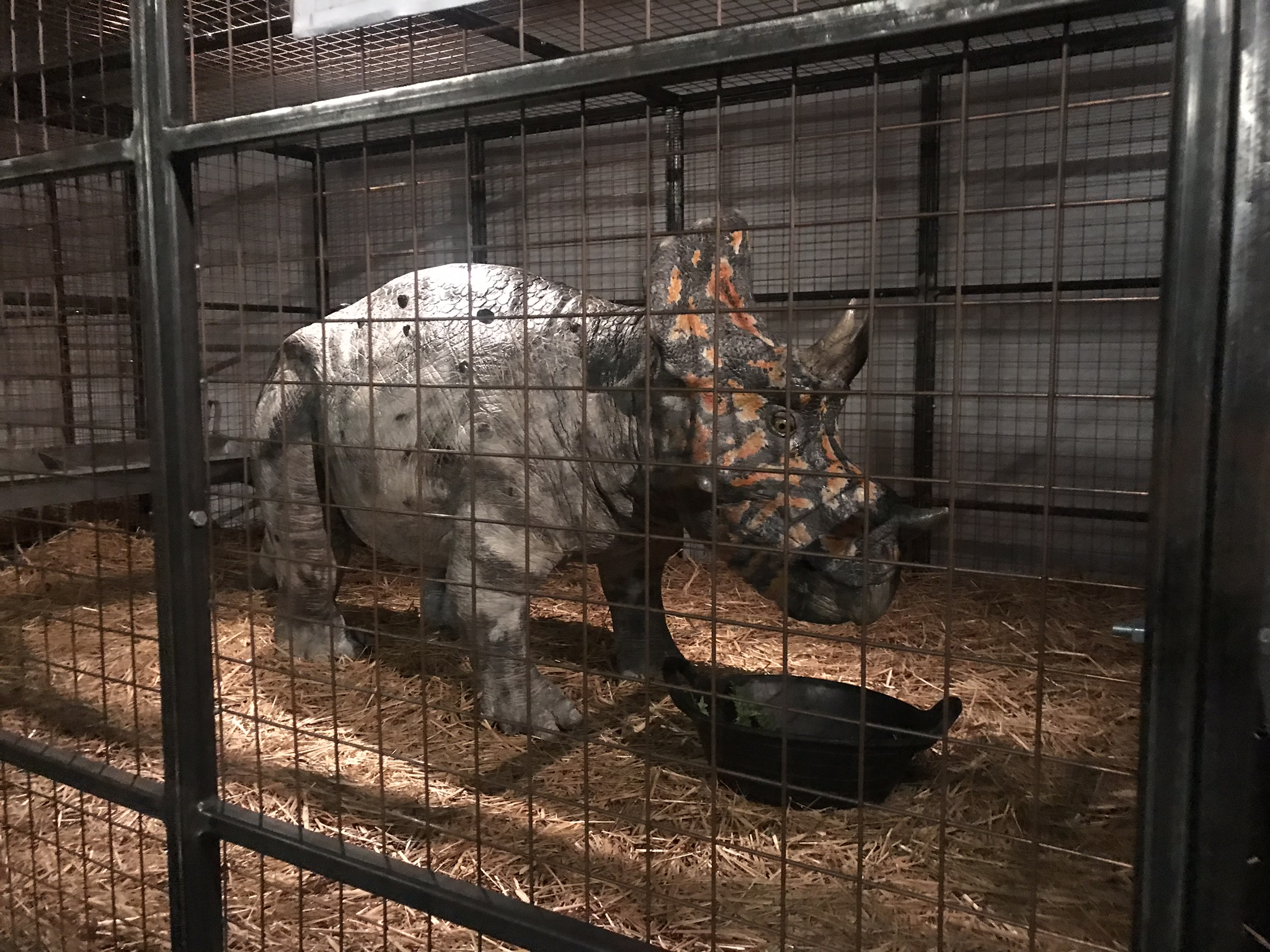 Triceratops at Dinosaurs In The Wild