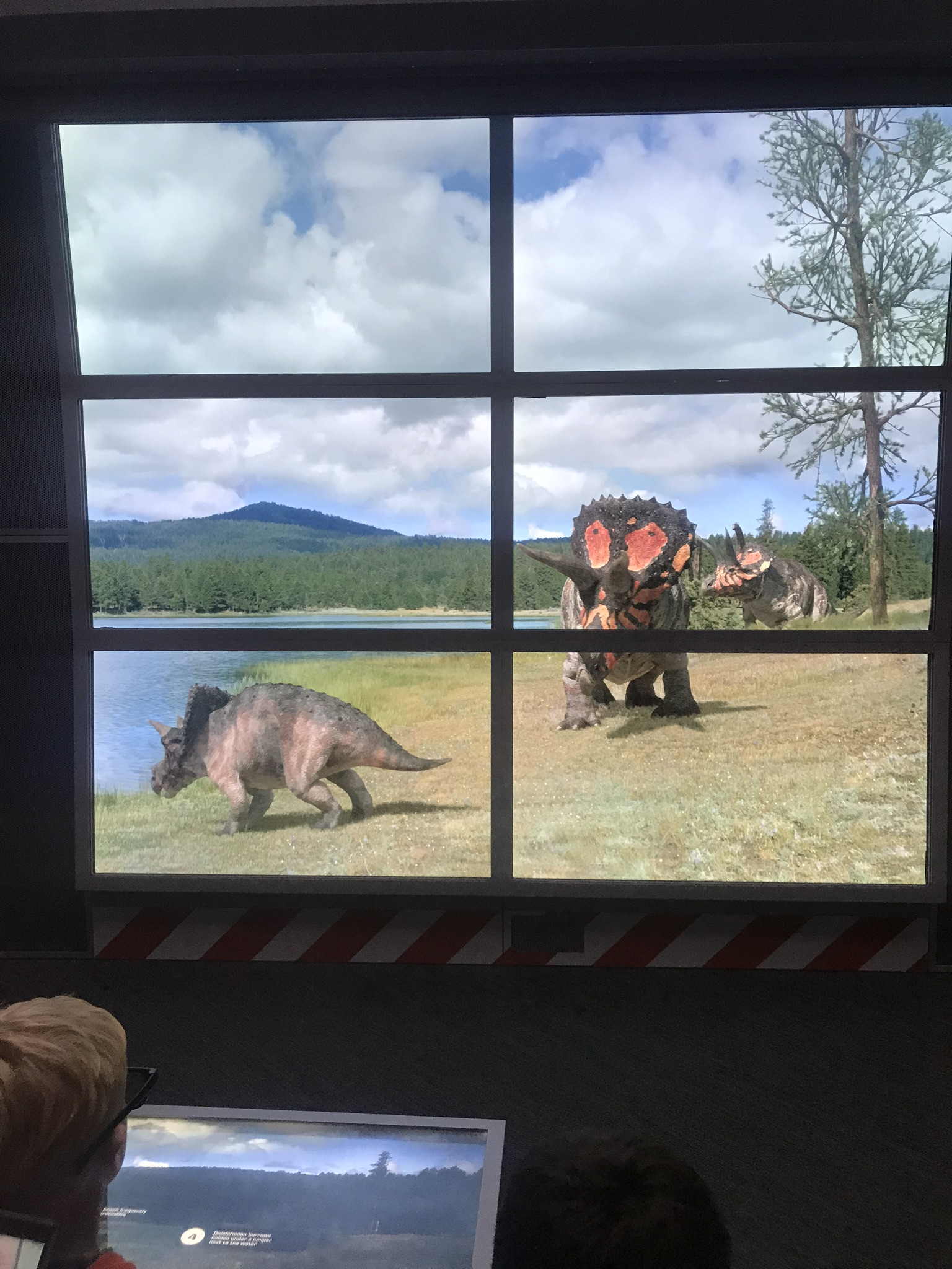 Triceratops at the look out