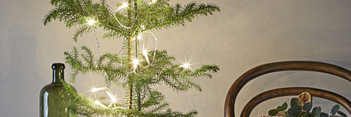 Deck the Halls with Houseplants